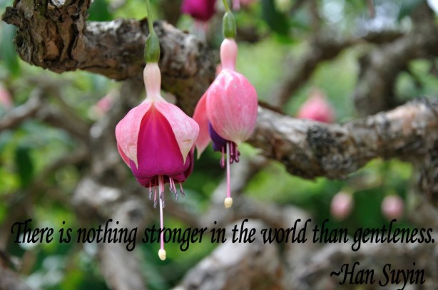 flower picture quote about gentleness