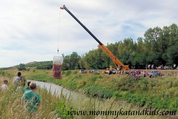lumsden duck derby 2012