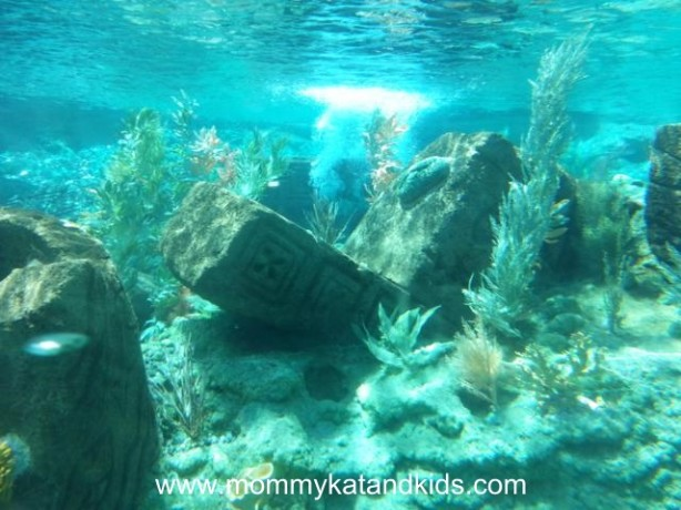 underwater scene from finding nemo submarine voyage