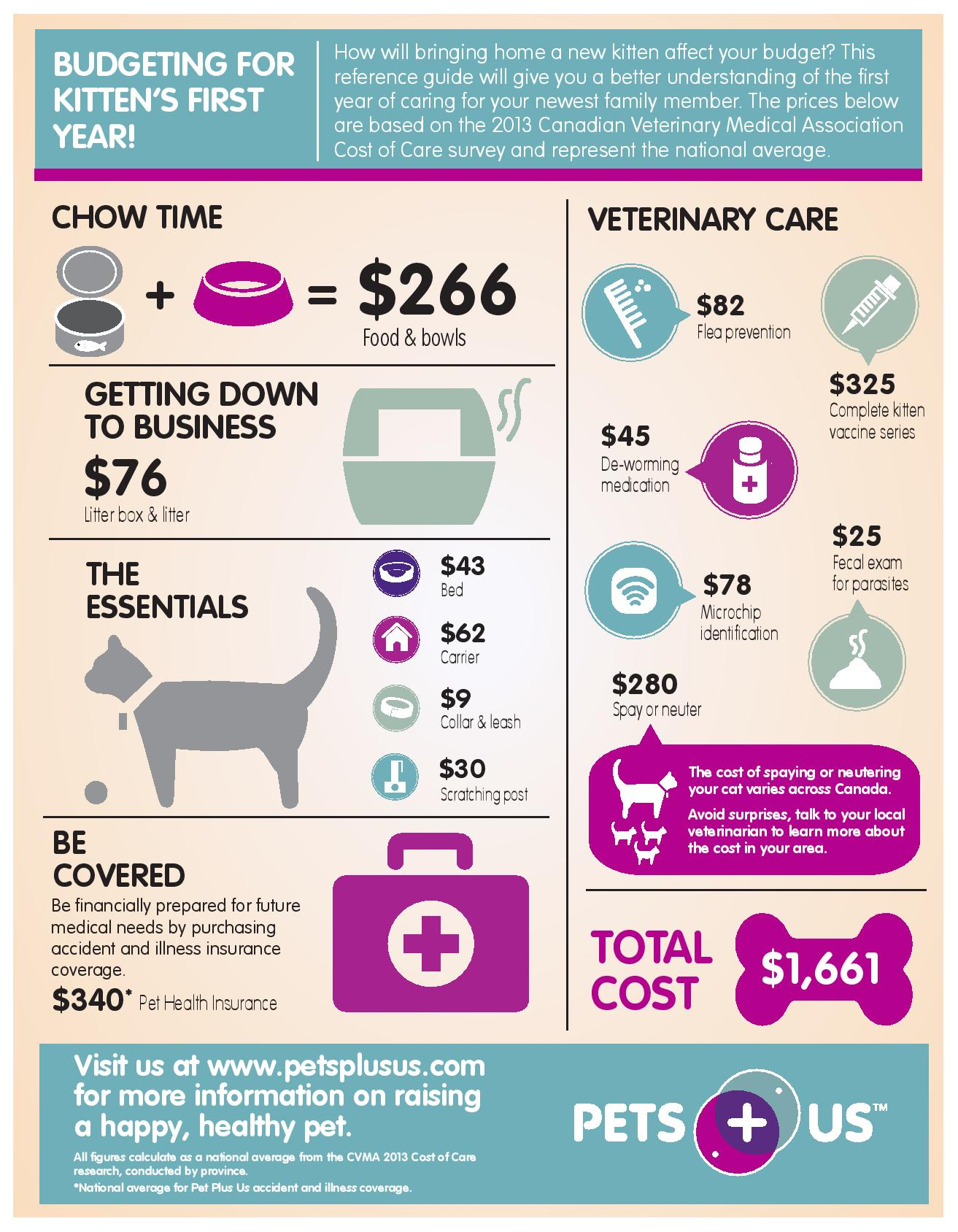 kitten care infographic