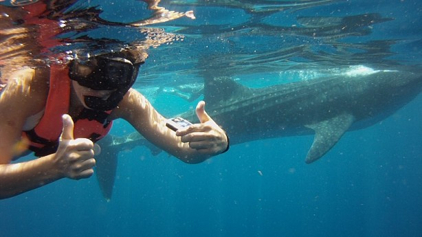 kathryn lavallee swimming with whale shark